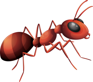 Benlux Hygiene Pests Control Services
