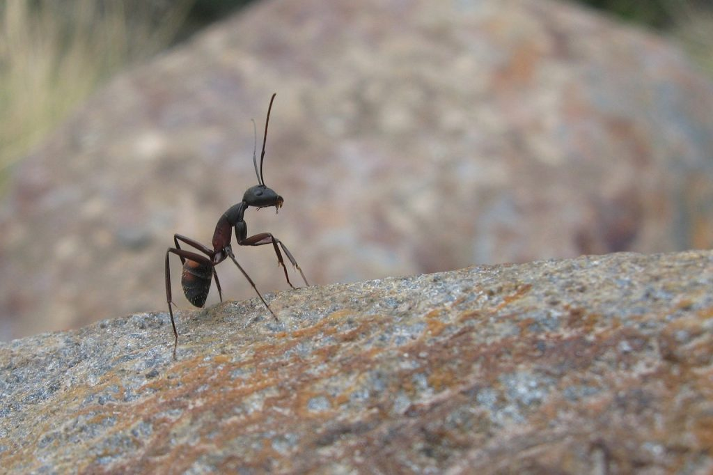 ant, insects, nature